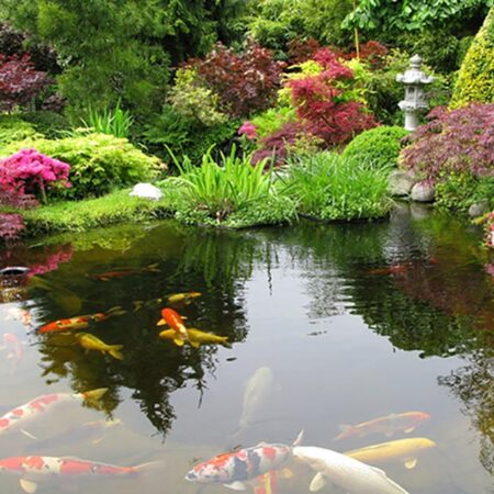 Zen Garden with Koi Pond